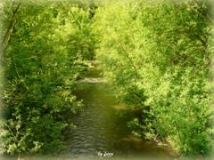 Romantic river... (Fuzzi :-)) Tags: trees sun holiday tree water sunshine river wasser urlaub panasonic fluss sonne bäume baum rheinland pfalz boppard sonnenschein dmctz3 tz3