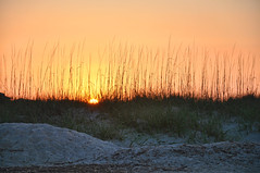 Sea Oats (Greg Foster Photography) Tags: sunset sky sun beach sc sunrise dunes southcarolina seaoats