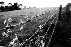 125 (aimz_durrant) Tags: blackandwhite field fence project photography sony barbedwire 365 slt a35 365project sonyslta35 sonya35