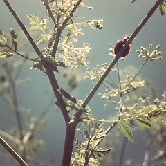 #ladybug hide and seek (stupid blue) Tags: android instagram andrography