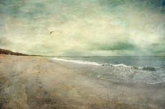 One (borealnz) Tags: ocean sea sky beach brighton gull footprints stormy otago dunedin