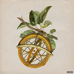 Transverse 3 (strng) Tags: apple leaves collage vintage branch sphere navigate strng armillar