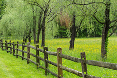 The Fence (Ranjana B) Tags: farm stirling