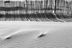Lieder der Verganglichkeit-Songs of Transience (Rainer ) Tags: light shadow bw beach lines backlight strand bn sw katwijk gegenlicht penderecki staketenzaun palingfence 1685mm rainer