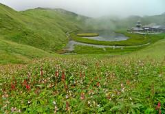 prashar lake (Monsoon) (Sougata2013) Tags: india flower green temple august monsoon mandi himachal himachalpradesh impatiensglandulifera himalayanbalsam prashar prasharlake trektoprashar