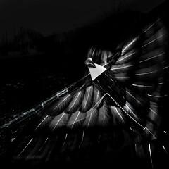 Portrait a l'aigle #6 (REMY SAGLIER - DOUBLERAY) Tags: portrait blackandwhite woman kite black bird face noir eagle noiretblanc femme emma barbara facetoface oiseau profil visage cerfvolant aigle faceaface aiglenoir