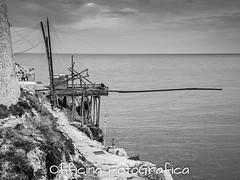 DSCN2291 (Officina FotoGrafica) Tags: cane nikon san mare tremiti porto michele gatto spiaggia rodi vieste vacanze gargano peschici trabucco arcangelo p7700 graganico