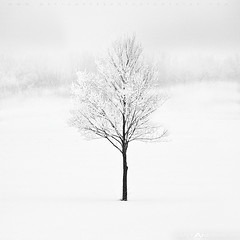 Winter Tree #9 720px (Matt Anderson Photography) Tags: travel trees winter two sky people bw white snow plant canada black tree art nature field weather rock horizontal pine wisconsin america matt season landscape outdoors photography one maple oak long gallery day shot image time quebec farm no small country capital north group fine walnut scenic style objects nobody location panoramic double anderson capitol madison commercial solo daytime dane dual agriculture desolate wi isolated albion wis lifeless wisc descriptors otherkeywords mattandersonphotography zzzpics