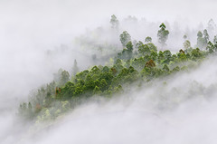 Cloud Foliage [Explored] (eggysayoga) Tags: bali mist tree green misty fog indonesia nikon asia day foggy sigma os foliage f28 minimalist 70200mm kintamani bangli d7000