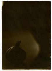 2014.01.17 (levas) Tags: 2014 bw 13x18 stilllife wephota bn111 mentor garlic directpositive blackandwhite