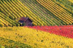 Little House in the Autumn Vineyard (Habub3) Tags: travel autumn red house holiday color green nature yellow canon germany landscape deutschland vineyard search europa europe urlaub herbst natur haus vine powershot landschaft vacance reise wein weinberg g12 2014 weinstadt habu
