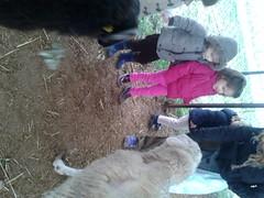 orvalle-infantil-granja (5)