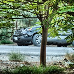 Sam photographer (سامر اللسل) Tags: me rose follow jeddah followme البحرين منصوري عمان تصويري جدة الباحه مصور الطائف فوتوغرافي الجنوب {vision}:{outdoor}=0989 {flickrandroidapp}:{filter}=none