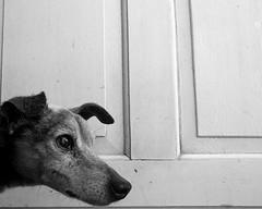 Pingo (hnusch) Tags: dog cao cachorro pingo