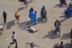 Un dia normal a la India (Ricard RP) Tags: india asia cows sacred hinduism indien rajasthan khe vacas rajastan vaques hinduisme hinduismo jaisailmer