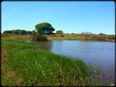 El Rompido (Huelva) (sky_hlv) Tags: espaa beach rio andaluca spain huelva playa atlanticocean pinares riopiedras costadelaluz cartaya elrompido oceanoatlntico reservanatural