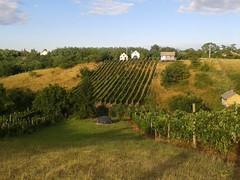 Vineyard. (Khalmi Luca) Tags: panorama house vineyard village view vine grape