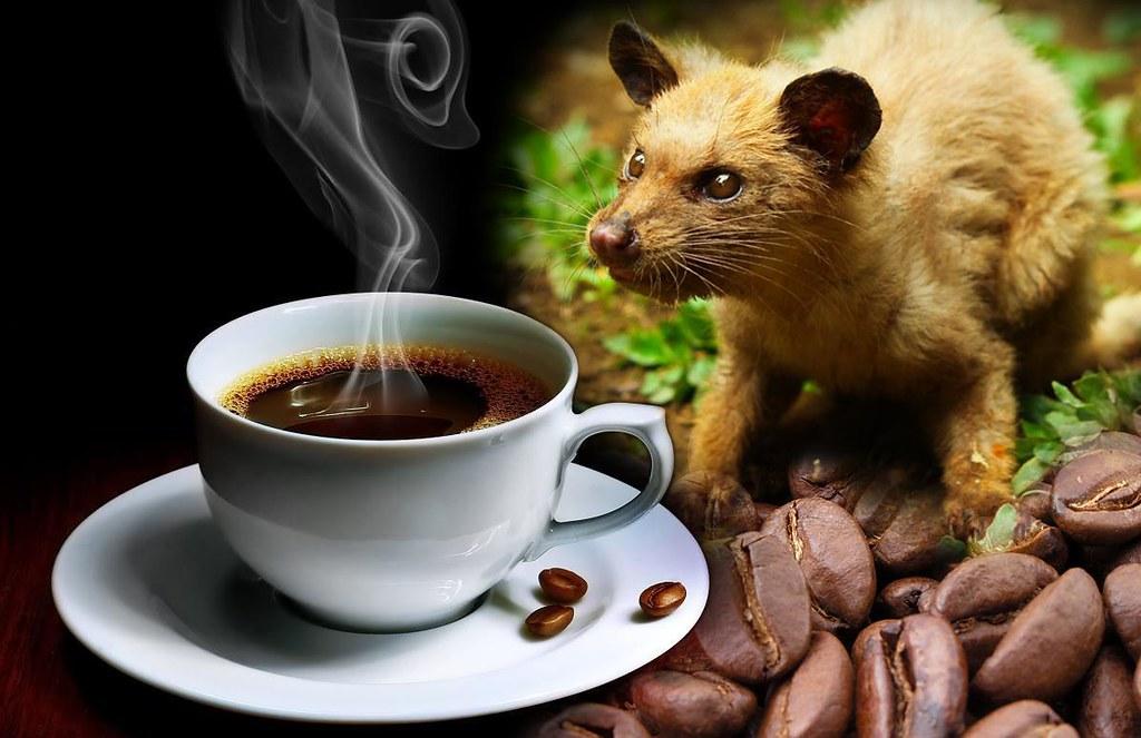 Cafe chồn