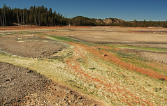 Colorful overflows (zgrial) Tags: landscape runoffchannels overflows minerals algae bacteria water yellowstone nationalpark wyoming usa geothermal geology summer hot acidic norrisgeyserbasin zgrial