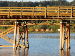 Under the pier (jamica1) Tags: railroad canada train bc arm pacific salmon railway rr columbia canadian british freight shuswap