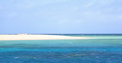 Michaelmas Cay (Plymography Down Under!) Tags: ocean sea bird water june coral island star photographer state south great australia queensland adelaide barrier hastings cairns reef cay sanctuary cruises seastar jasonnolan michaelmas 2013 plymography wwwplymographycom plymographycom
