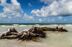 Dead wood (Photos by Christopher Percy) Tags: beach water landscape florida sony bluesky tamron fortdesoto