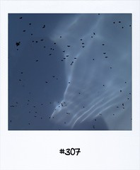 "#DailyPolaroid of 23-7-13 #307 • <a style=""font-size:0.8em;"" href=""http://www.flickr.com/photos/47939785@N05/9384746530/"" target=""_blank"">View on Flickr</a>"