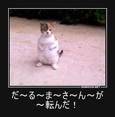 だ~る~ま~さ~ん~が~転んだ! #猫 #ドラえもん (Demochi.Net) Tags: japan japanese fun cute demotivators demotivator motivator motivators culture life sexy 日本 デモチ お笑い 一言 大喜利 風刺 ユーモア 眼鏡 おっぱい r18 女 女装 猫 子猫 社会 少子化 教育 ペット 格差 愛犬 女性 悪い 女子 初恋 カップル 恋 結婚 文化 金 経済 家族 子供 政治 巨乳 ゲイ 会社 企業