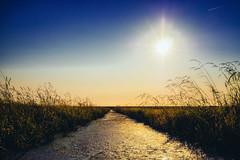 jade. (angsthase.) Tags: sunset summer sky sun green water field germany landscape deutschland wasser himmel flare grün norddeutschland niedersachsen mft jadebusen wesermarsch 2013 micro43 lumixg20f17 epl5 olympuspenepl5
