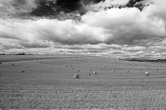 A Landscape View Of A Field Of Hay Bales On The South Downs. West Sussex.England. Uk (Black and white) (PANDOOZY PHOTOS) Tags: uk england white black west nature field landscape sussex countryside view britain great fields hay bales