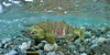 In Full Colour (Fish as art) Tags: ecology fishing salmon flyfishing nikkor pacificcoast underwaterphotography fisheries keta unterwasserfotografie pacificsalmon salmonrivers salmonids paulvecseiphotography underwaterphotographypaulvecsei salmonbiology underwatersalmonphotos underwaterfishphotographysalmon