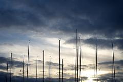 Masts 2 (s_evenseth) Tags: norway sailboat marina norge sailing fujifilm mast brum blommenholm solvik xe1 xf35mmf14