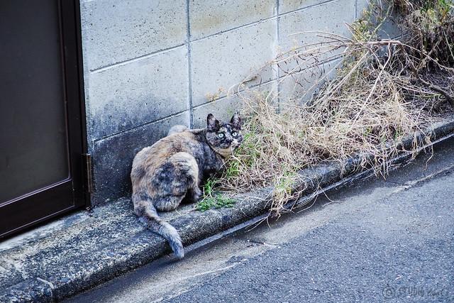 Today's Cat@2013-10-07