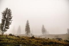 Nebbia @ Vallesinella (Matteo Villani) Tags: italy mountains fog trekking hiking nebbia montagna tamron2875f28 trentinoaltoadige valrendena matteovillani canoneos5dmkii