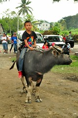 A Boy and His Buffalo (photo-razzo) Tags: buffalo asia malaysia borneo sabah nationalgeographic 2013 kotabelud tamubesar discoveryphotos annualgrandmarket