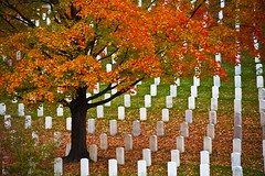 "Rest in ""Peace"" (Ausamah) Tags: autumn trees red orange woman usa man sexy green art fall nature beautiful cemetery graveyard leaves yellow sex stone infantry arlington dead soldier photography death virginia photo dc washington bahrain amazing nice war branch colours peace force gulf place purple head military air rip headstone tomb tombstone navy arab fallen seals rest marines resting martyr airforce veteran officer    ausamah alabsi"
