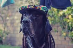 Tisón (laurw) Tags: dog funny perro