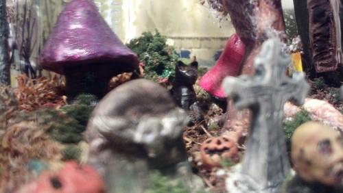 the cat in the terrarium