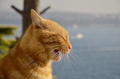 Cat (Nadire NdR.P) Tags: animal cat turkey istanbul topkapi sunnyday