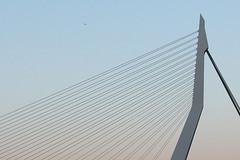 Lines (ohank1951) Tags: netherlands architecture skyscraper rotterdam nederland kopvanzuid architectuur erasmusbrug wilhelminakade unstudio benvanberkel wolkenkrabber wilhelminapier hoogbouw rijnhaven manhattanaandemaas mainport