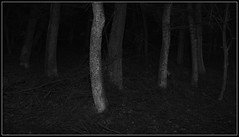 Ooky Spooky (spodzone) Tags: longexposure trees light wild blackandwhite panorama lightpainting art nature lines vertical composite night composition manipulated dark lens landscape photography scotland scary flora emotion unitedkingdom space empty dramatic places calm creepy spooky equipment negativespace filter zen chilly isolation stark striking oddity simple toned solitary pure contrasts portpatrick minimalist confusing beech stacked lightanddark elegance existentialist dumfriesandgalloway gbr hugin digikam timelessness tonemapped shapeandform rawconversion rawtherapee simplecomplex meaningemptiness sony1855 darktable nastynice digitalorange abstractqualities satoripunctum digitalgradnd digitallowpass