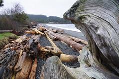 memories of Sandwell Provincial Park (Barbara A. White) Tags: britishcolumbia shoreline driftwood gabriolaisland wideanglelens sandwellprovincialpark
