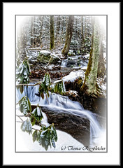 White Oak Run in Winter (travelphotographer2003) Tags: winter usa snow cold creek stream clear westvirginia rhododendron brook relaxation exploration idyllic freshness appalachianmountains purity tranquilscene cleanwater coldwater outdoorrecreation alleghenymountains monongahelanationalforest beautyinnature webstercounty rushingstream whiteoakrun nativetroutstream brooktroutstream