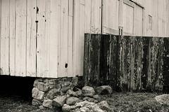untitled-7 (Kamal H.) Tags: barn farm ptreyes abaondoned 50mmsummilux ruralabstract weahteredwood leica240 rockfooterblackandwhite