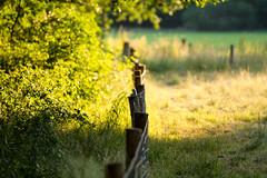 Loonse en Drunense duinen (Rens Bressers) Tags: summer en sun nature june 30 digital canon eos evening natuur zomer duinen 2015 udenhout drunense loonse