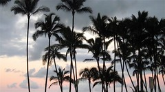 cue the Miami Vice theme music; you know you hear it (now)  Jan Hammer, 1985 (anokarina) Tags: sunset clouds hawaii palmtrees hi bigisland hilo canonpowershotsd3500is bayfrontbeachpark