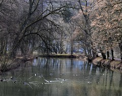 In the park of Hildburghausen (:Linda:) Tags: germany thuringia town hildburghausen canal tree reflection