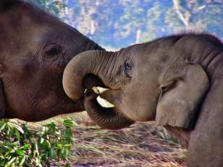 NEPAL, Royal Chitwan-Nationalpark, Elefanten-Aufzuchtstation, 15332/8039