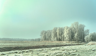 Frozen Forest.