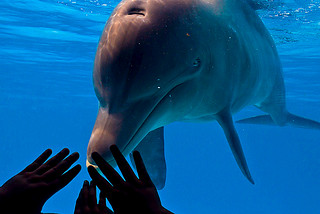 Dolphin´s hands